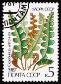 Postage stamp Russia 1987 Rustyback, Ceterach Officinarum, Fern — Zdjęcie stockowe