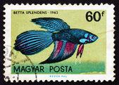 Postage stamp Hungary 1962 Siamese Fighting Fish, Tropical Fish — Stock Photo