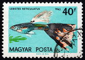 Postage stamp Hungary 1962 Guppy, Tropical Fish — Stock Photo