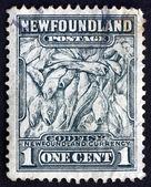 Postage stamp Newfoundland 1932 Codfish, Newfoundland Currency — Stock Photo