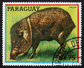 Postage stamp Paraguay 1984 Peccary, New World Pig — Stock Photo