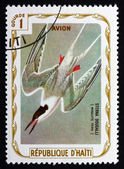 Postage stamp Haiti 1975 Roseate Tern, Seabird — Stock Photo