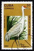 Żuraw kanadyjski znaczek Kuba 1993, ptak — Zdjęcie stockowe