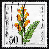 Postage stamp Germany 1981 Moor-king Lousewort, Plant — Stock Photo