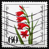 Postage stamp Germany 1981 Marsh Gladiolus, Plant — Stock Photo