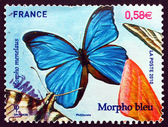 Postage stamp France 2010 Menelaus Blue Morpho, Butterfly — Stock Photo