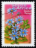 Postage stamp South Africa 2003 Blue Marguerite, Perennial Plant — Stock Photo