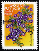 Postage stamp South Africa 2003 Karoo Violet, Perennial Plant — Stock Photo