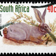 Постер, плакат: Postage stamp South Africa 1998 Riverine Rabbit