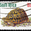Постер, плакат: Postage stamp South Africa 1998 Geometric Tortoise Reptile