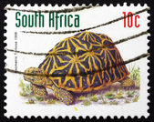 Postage stamp South Africa 1998 Geometric Tortoise, Reptile — Stock Photo