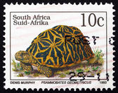Postage stamp South Africa 1993 Geometric Tortoise, Reptile — Stock Photo