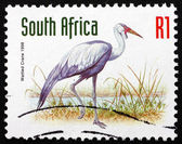 Postage stamp South Africa 1998 Wattled Crane — Stock Photo