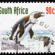 Постер, плакат: Postage stamp South Africa 1998 Jackass Penguin Bird