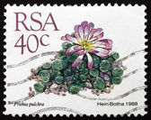 Postage stamp South Africa 1988 Window Plants, Succulent Plant — Stock Photo