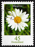 Postage stamp Germany 2005 Common Daisy, Flowering Plant — Photo