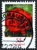 Postage stamp Germany 2008 Garden Rose, Flowering Plant — Stock Photo
