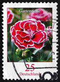 Postage stamp Germany 2008 Carnation, Flowering Plant — Photo