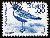 Postage stamp Iceland 1981 Golden Plover, Bird — Stock Photo