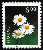Postage stamp Norway 1997Oxeye Daisy, Flowering Plant — Stock Photo