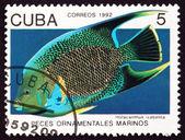 Postage stamp Cuba 1992 Blue Angelfish, Marine Fish — Stock Photo