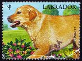 Postage stamp France 2011 Labrador Retriever, Dog Breed — Stock Photo