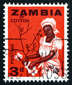 Postage stamp Zambia 1964 Woman Picking Cotton — Stock Photo
