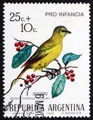 Pinzón de estampilla argentina 1972 azafrán, pájaro — Foto de Stock