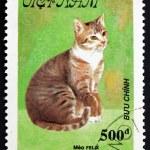 Постер, плакат: Postage stamp Vietnam 1990 Meo Felix Cat