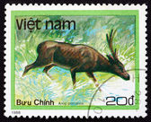 Postage stamp Vietnam 1988 Hog Deer, is a Smal Deer — Stock Photo