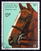 Postage stamp Laos 1987 Horse head — Stock Photo