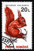 Postage stamp Romania 1993 Red Squirrel — Stok fotoğraf