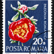 Postage stamp Romania 1972 Peony, Flowering Plant — Stockfoto