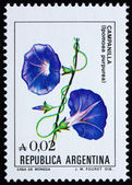 Postage stamp Argentina 1985 Common Morning Glory, Flowering Pla — 图库照片
