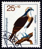 Postage stamp Germany 1973 Osprey, Bird of Prey — Stock Photo