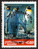 Postage stamp Cambodia 2001 King Penguin — Stock Photo