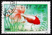 Postage stamp Vietnam 1990 Red-headed Goldfish, Freshwater Fish — Foto Stock