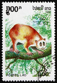 Postage stamp Laos 1992 Pygmy Loris, primate — Stock Photo
