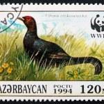 Postage stamp Azerbaijan 1994 Caucasian Grouse, Bird — Stock Photo #50018851