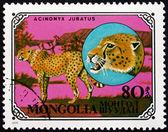 почтовые марки монголии 1979 гепард, африканских животных — Стоковое фото