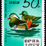 Postage stamp North Korea 1979 Mandarin Duck — Stock Photo