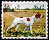 Postage stamp Spain 1972 Pointer, Dog Breed — Stock Photo