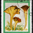 Postage stamp Guinea 1995 Yellow Foot, Mushroom — Stock Photo #50237973