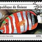 Постер, плакат: Postage stamp Guinea 1997 Harlequin Tuskfish