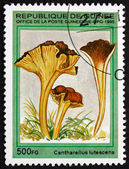 Postage stamp Guinea 1995 Yellow Foot, Mushroom — Stockfoto