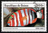Postage stamp Guinea 1997 Harlequin Tuskfish — Stockfoto