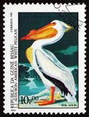 Postage stamp Guinea-Bissau 1985 American White Pelican, Bird — Stock Photo