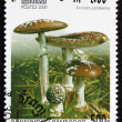 Postage stamp Cambodia 2000 Panther Cap, Mushroom — Stock Photo #50318741