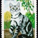Постер, плакат: Postage stamp Benin 1998 Striped Shorthair Cat