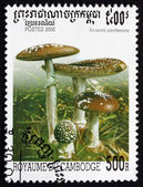 Postage stamp Cambodia 2000 Panther Cap, Mushroom — Stock Photo